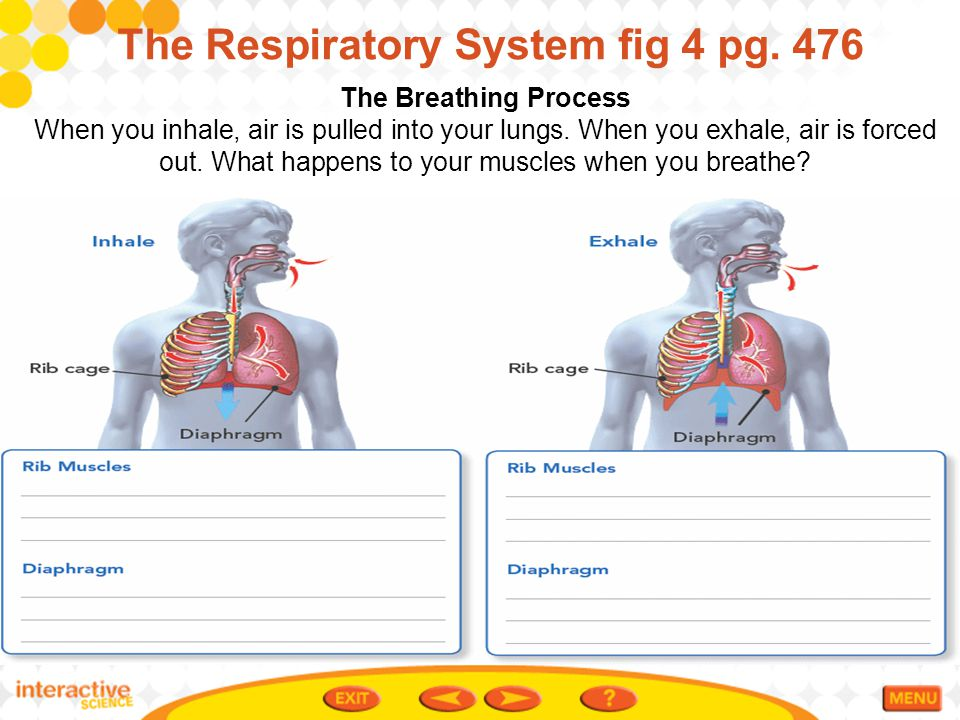 The Respiratory System fig 4 pg. 476