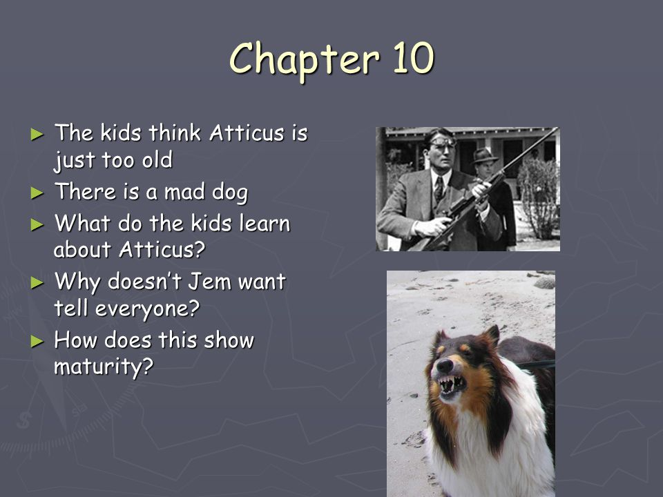 How Does Atticus Show Courage By Shooting The Dog