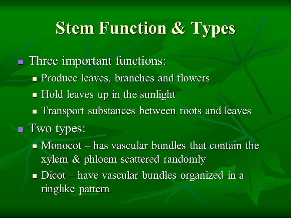 Stem Function & Types Three important functions: Two types: