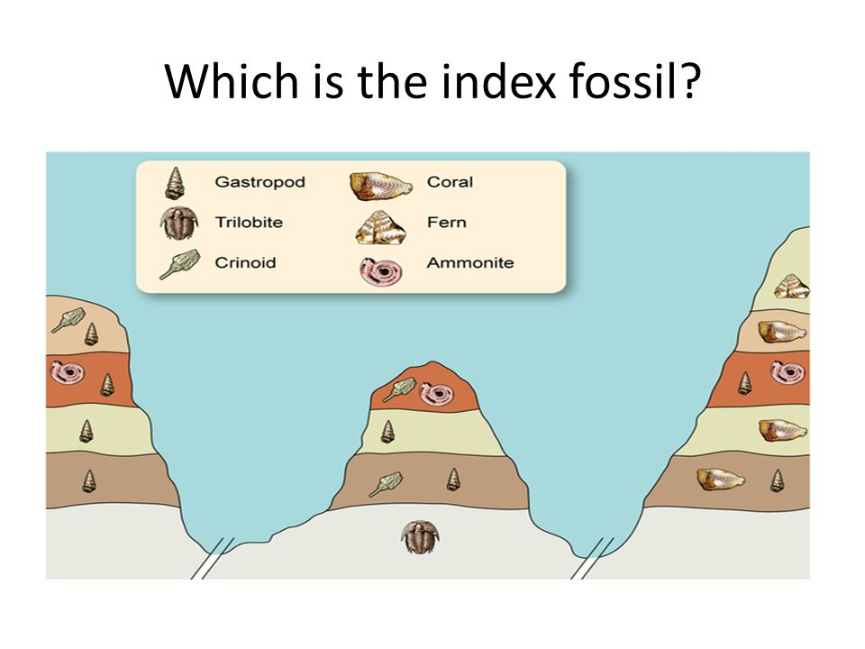 index fossil dating evolution