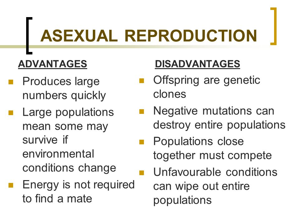 When is asexual reproduction advantageous images 248