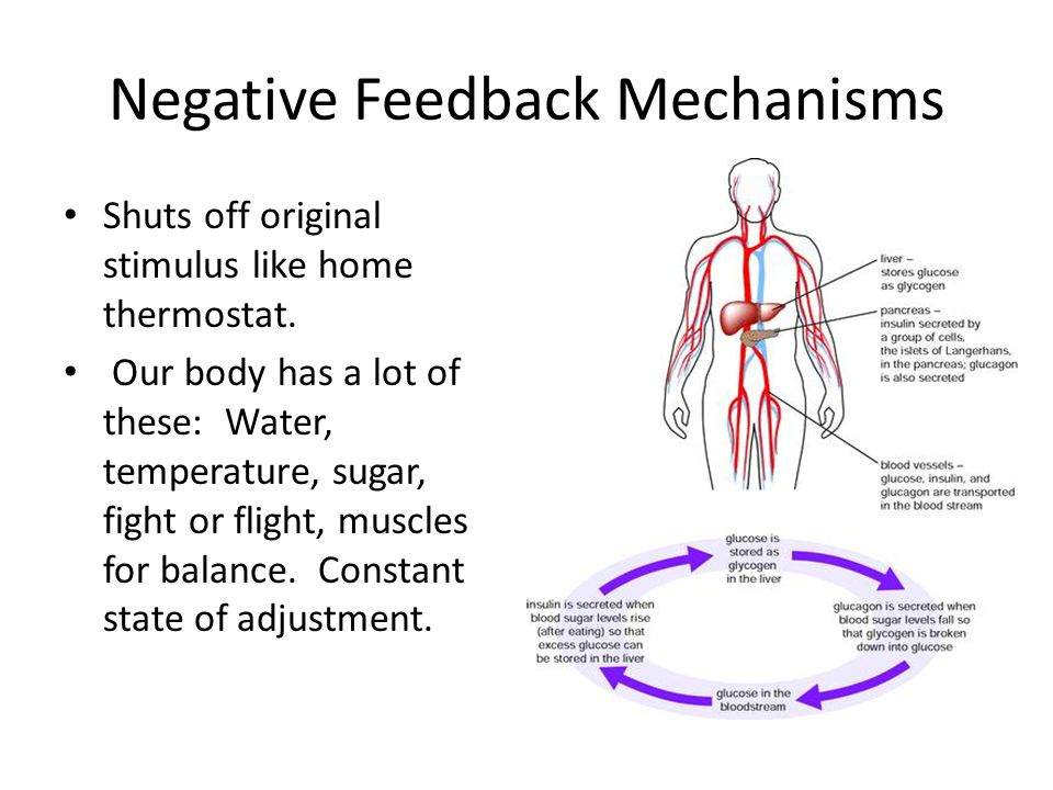 feedback mechanisms Negative feedback is a vital control mechanism for the body's homeostasis you saw an example of a feedback loop applied to temperature and identified the components involved this is an important example of how a negative feedback loop maintains homeostasis is the body's thermoregulation mechanism.