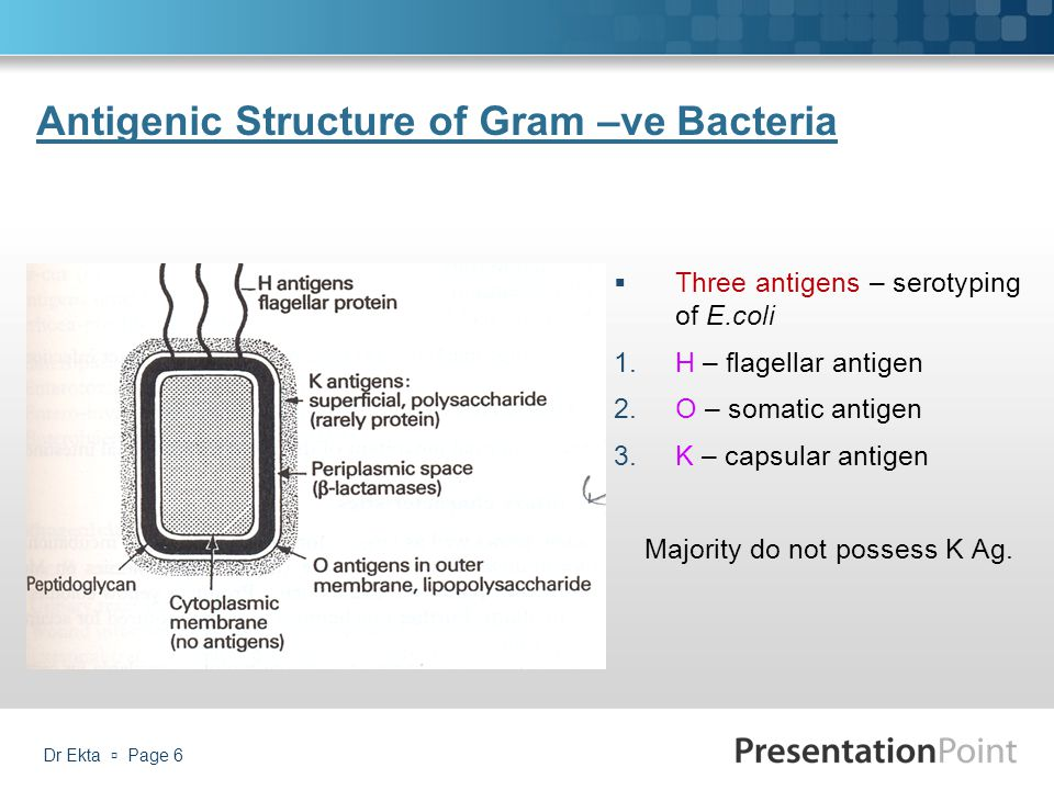 K Antigen Bacteria Medically Impor...