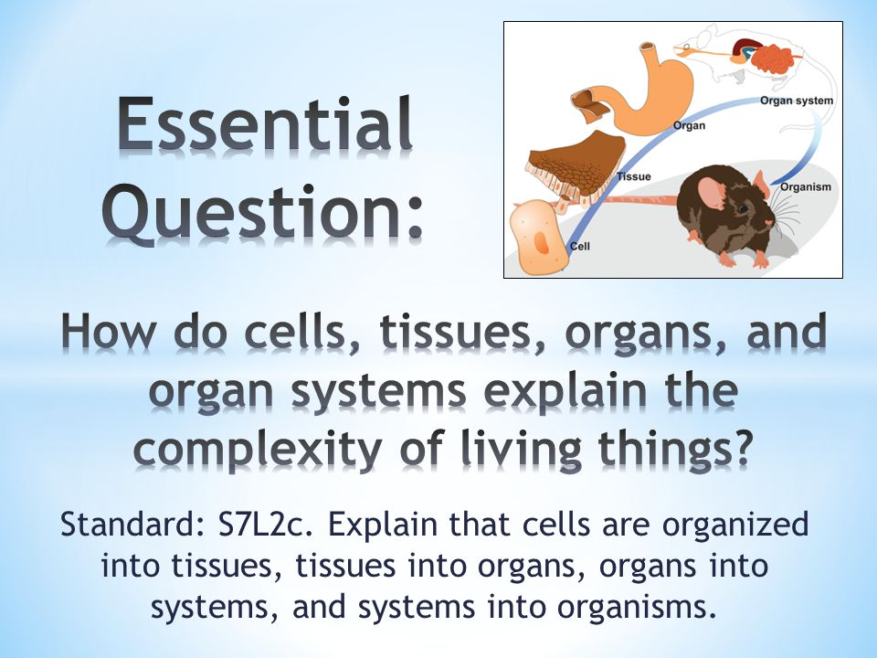 Essential Question How Do Cells Tissues Organs And Organ Systems. Essential Question How Do Cells Tissues Organs And Organ Systems Explain The. Worksheet. Cells And Tissues Worksheet Answers At Clickcart.co