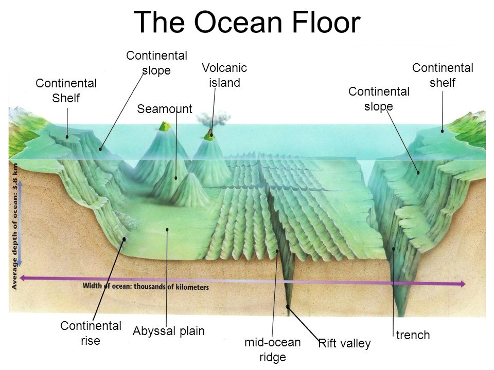 The ocean floor continental slope volcanic island for Define abyssal plain