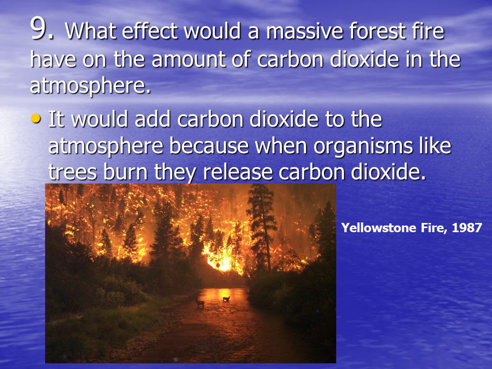 9. What effect would a massive forest fire have on the amount of carbon dioxide in the atmosphere.