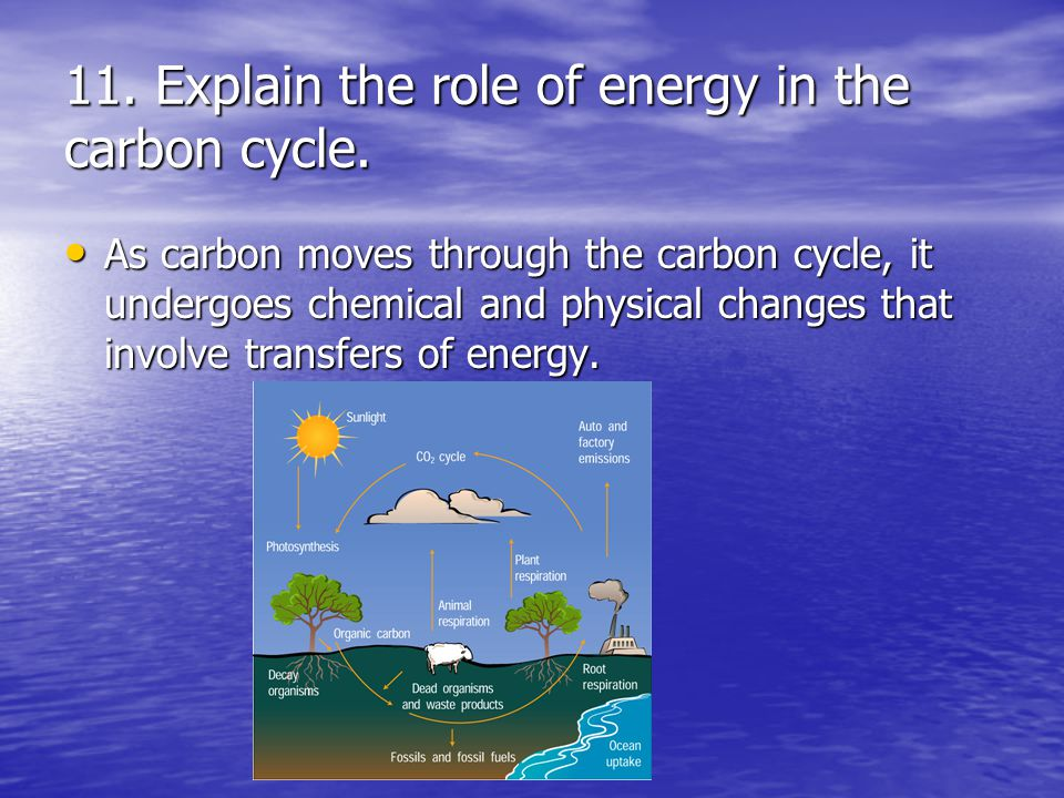11. Explain the role of energy in the carbon cycle.