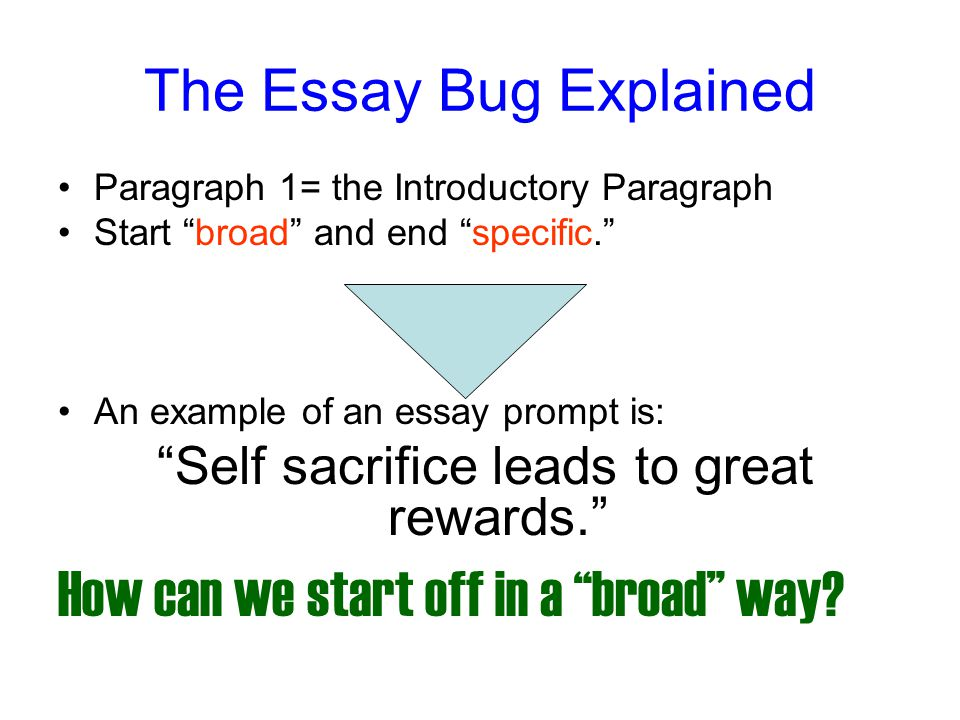 preparation for the multi paragraph portion of the exam ppt  the essay bug explained