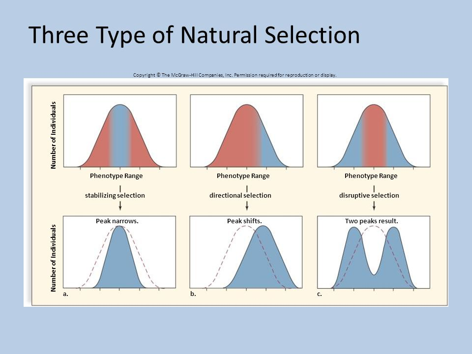 What Are The Three Types Of Natural Selection
