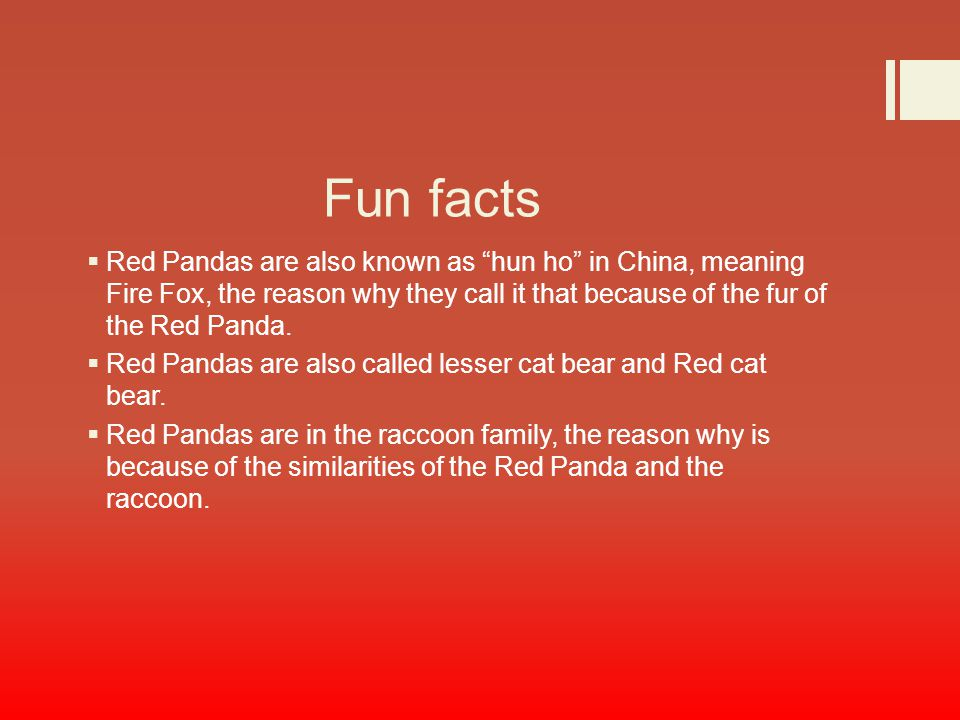 Red Panda by: Calvin Ines. - ppt download
