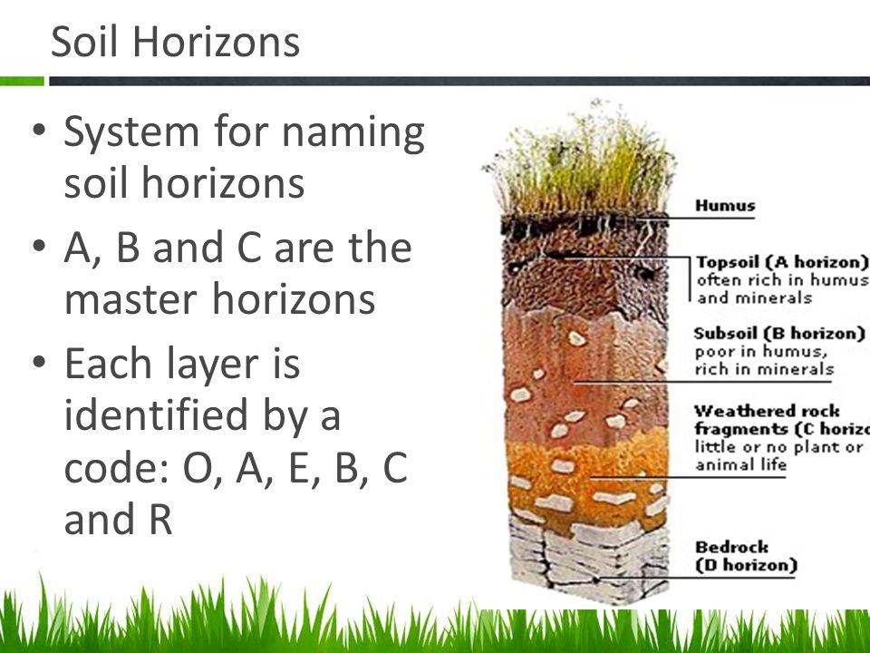 Agriscience and technology i introduction to soil science for Soil horizons