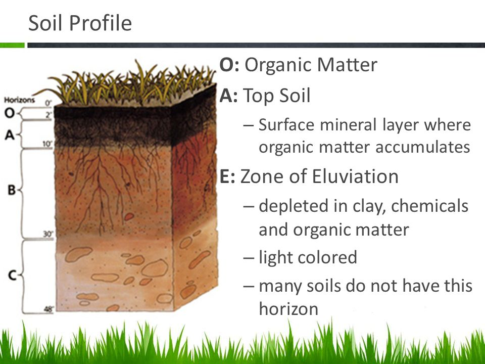 Agriscience and technology i introduction to soil science for Organic top soil