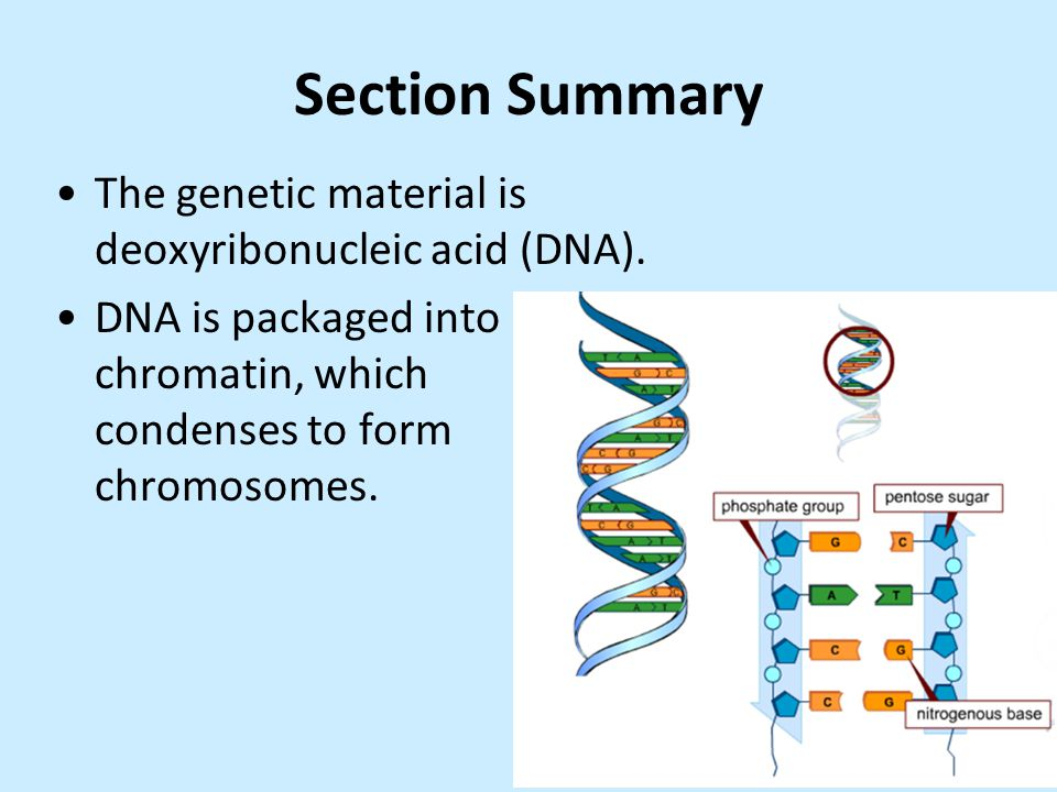 """genetics overview notes The new science of addiction: genetics and the brain below, creating a sketch that summarizes the action of each drug in the """"summary illustration"""" column."""