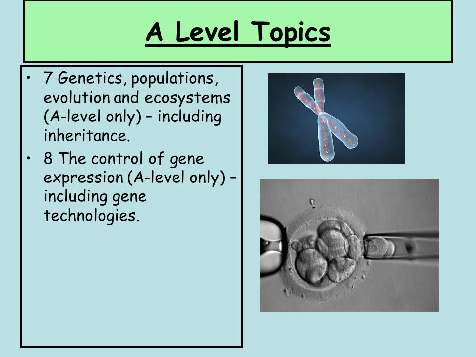 internal assessment biology: respiration in peas essay This investigation is the internal assessment and one single piece of work will  have a  respiration experiments  eight steps to an extended essay  extended essay - self review questions  there are many other opportunities for  practical work during an ib biology  2,8, respirometer/germinating seeds/ invertebrates.