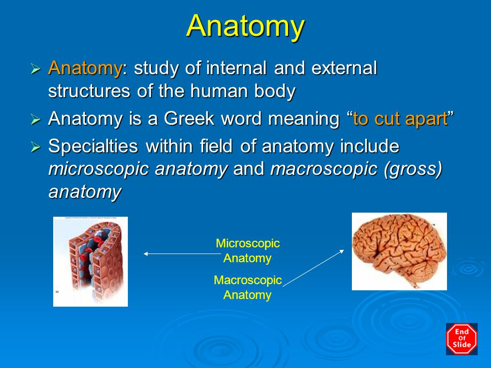 What does gross anatomy mean 2840606 - follow4more.info