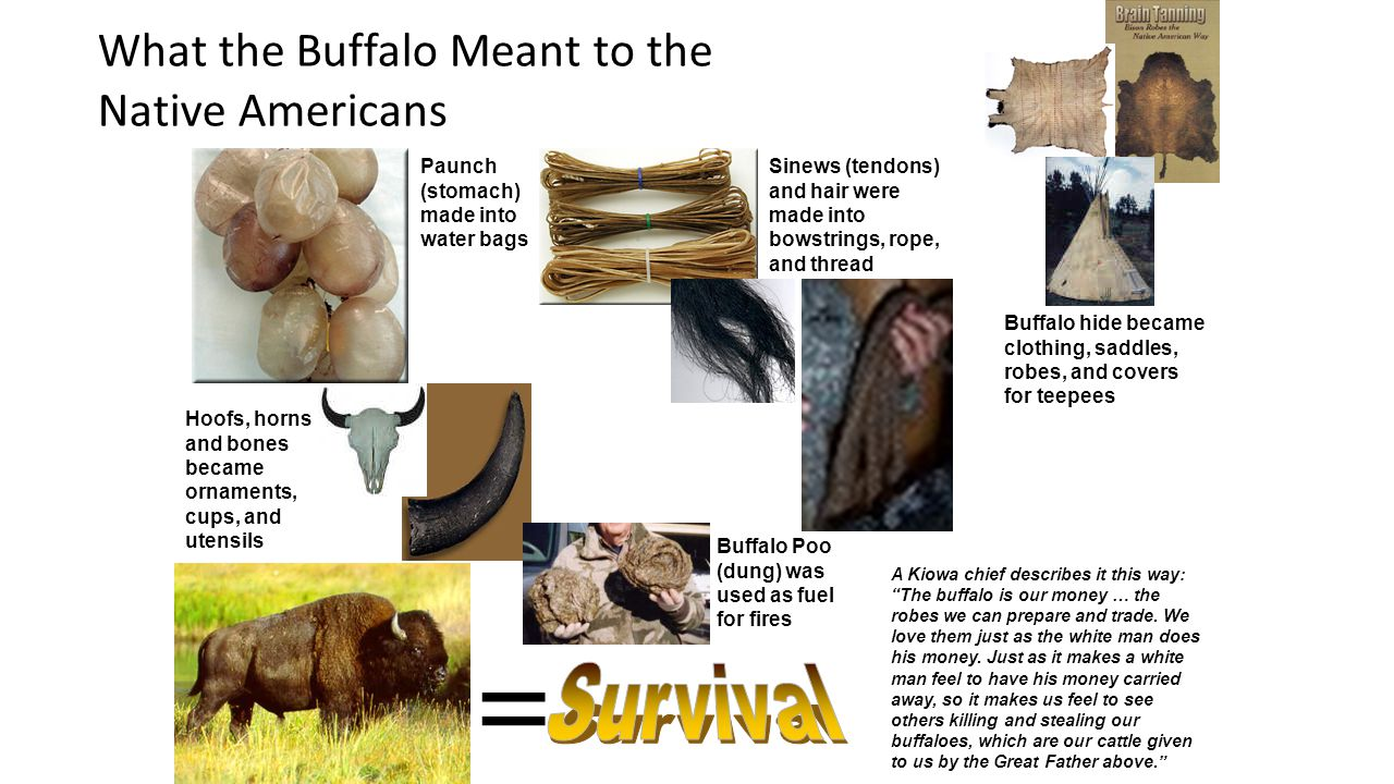 = Survival What the Buffalo Meant to the Native Americans