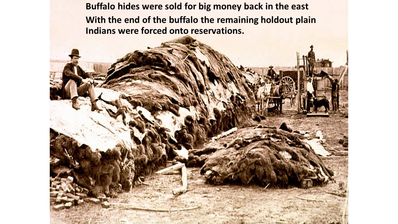 Buffalo hides were sold for big money back in the east