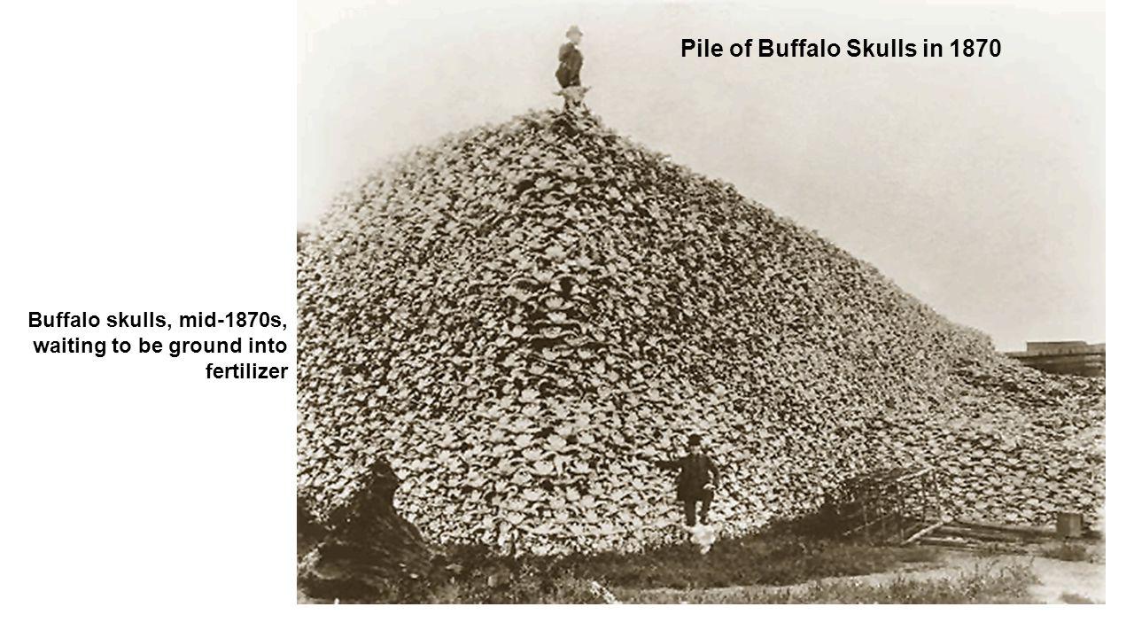 Pile of Buffalo Skulls in 1870