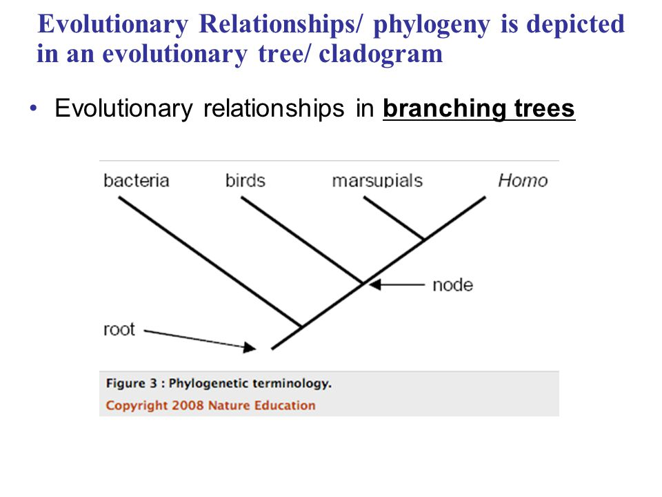 evolutionary relationships What are some methods biologists use to determine evolutionary relationships a: quick answer a more modern method, and one that takes into account the true evolutionary relationships between living things, is known as cladism.