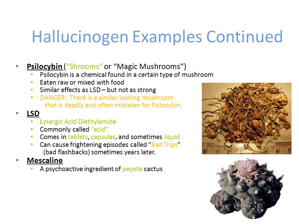hallucinogenic drugs essay In addition, throughout human history people worldwide have used psychoactive  drugs, especially hallucinogens, as part of their religious practices.