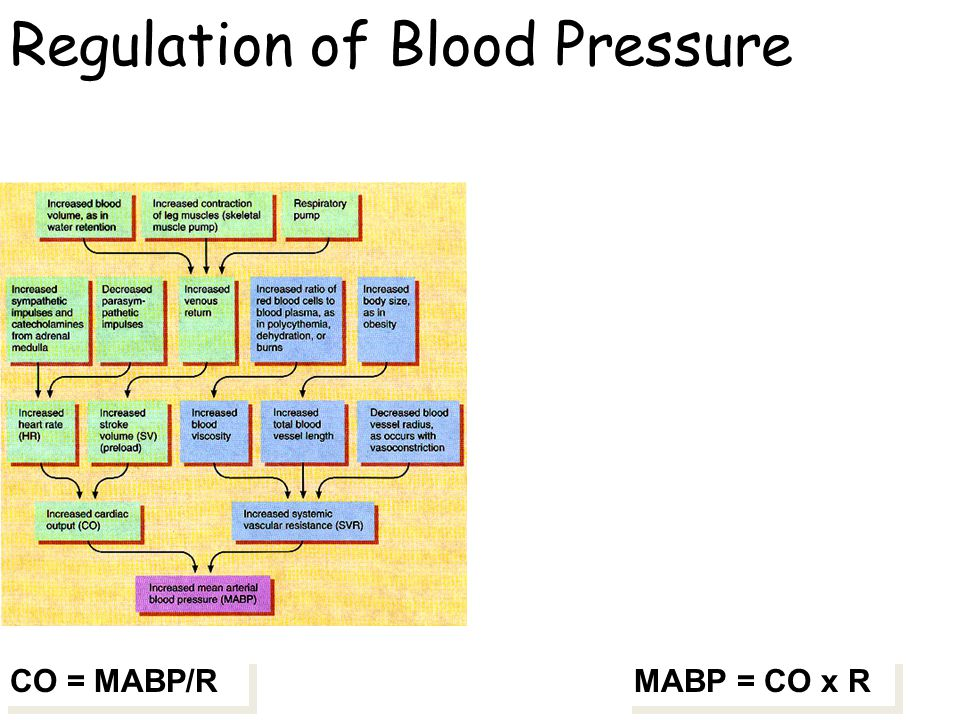 the cardiovascular system blood pressure regulation Physiology review: circulatory system and hormonal control this regulatory system controls blood contributes to the pressure driving blood back to the.