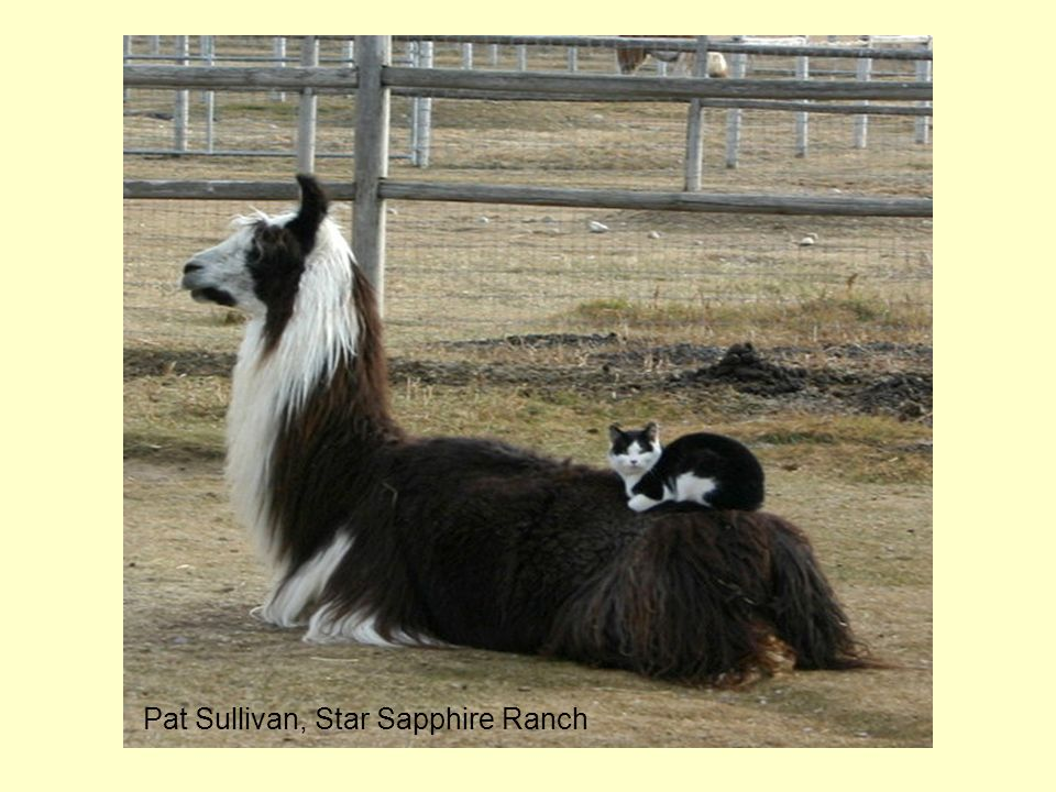 Pat Sullivan, Star Sapphire Ranch