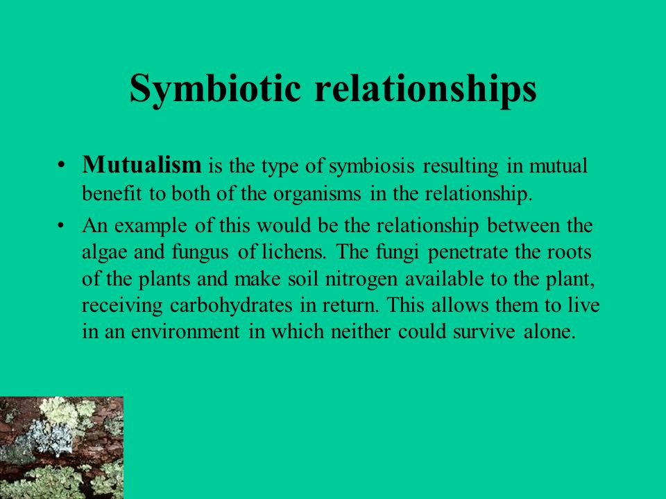 relationship between organisms and soil