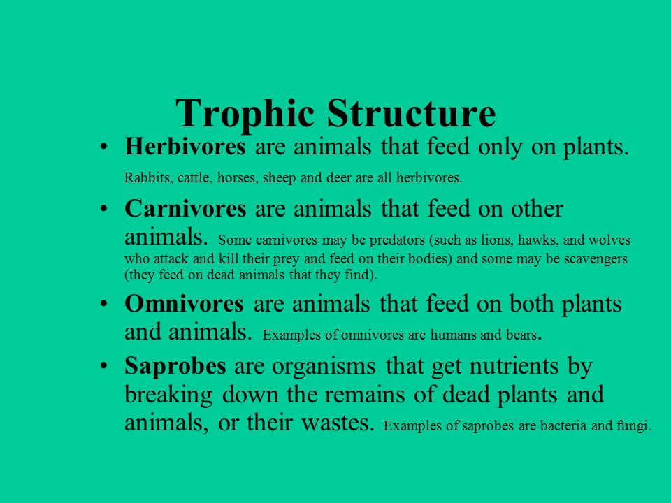 Trophic Structure Herbivores are animals that feed only on plants. Rabbits, cattle, horses, sheep and deer are all herbivores.