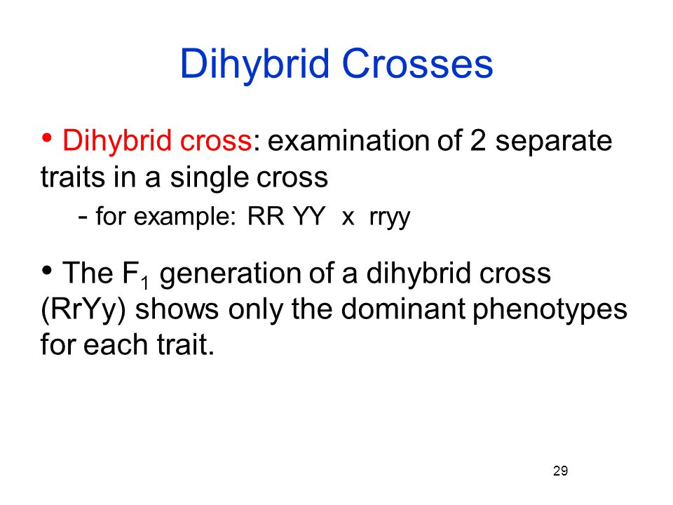 Dihybrid Crosses Dihybrid cross: examination of 2 separate traits in a single cross. for example: RR YY x rryy.