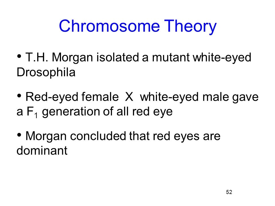 Chromosome Theory T.H. Morgan isolated a mutant white-eyed Drosophila