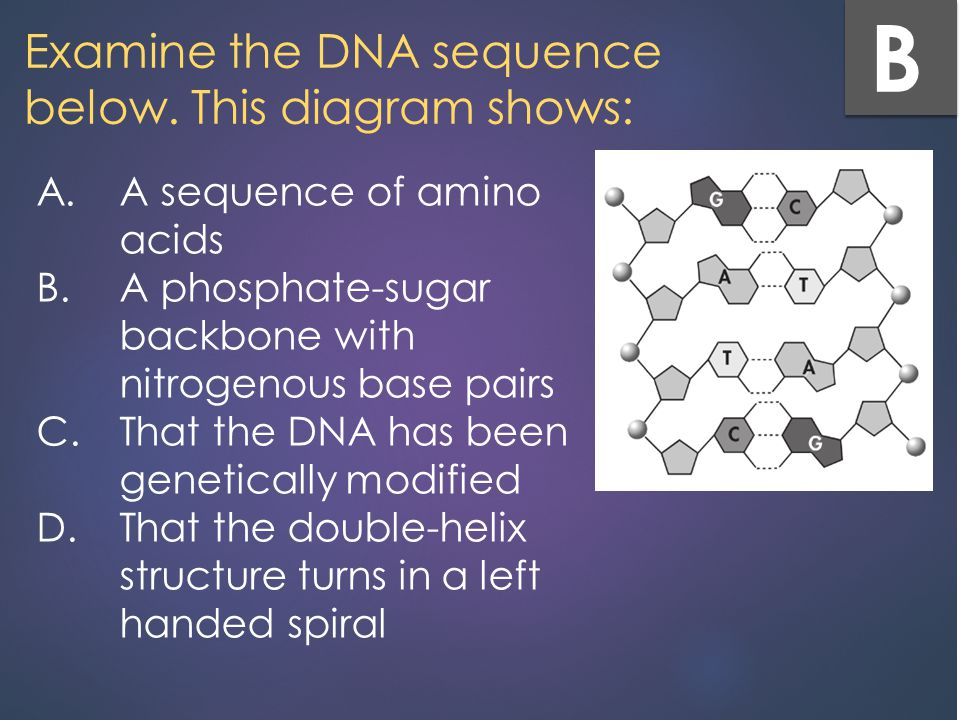 Tuesday 113 mins work on final review 30 mins power point review examine the dna sequence below this diagram shows ccuart Image collections