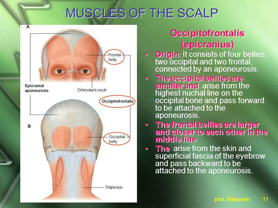 scalp. - ppt video online download, Human Body