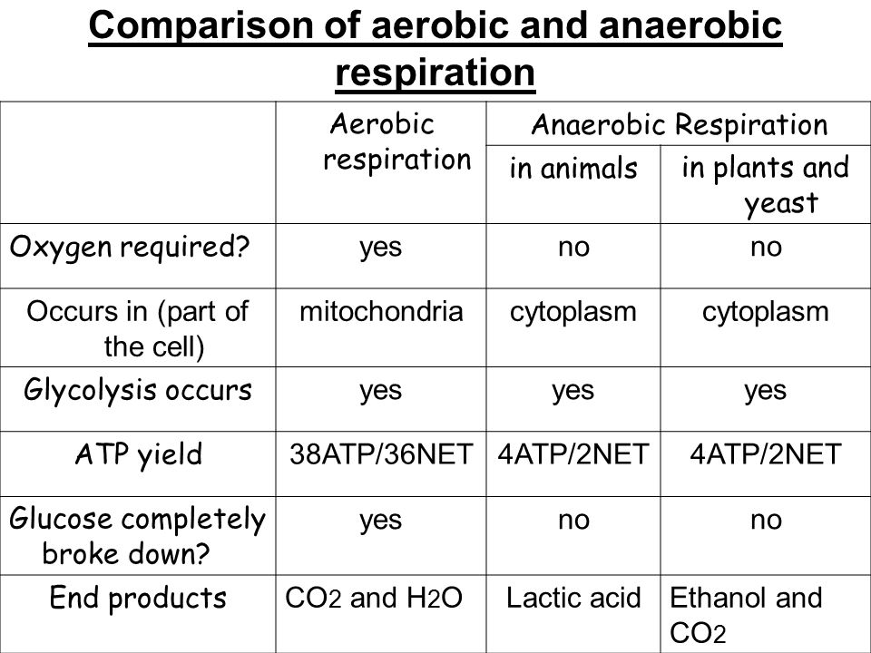 Item spec for benchmark sc l ppt video online download comparison of aerobic and anaerobic respiration ccuart Gallery