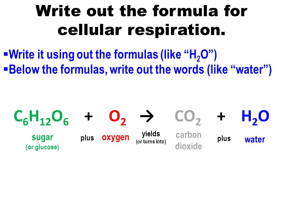 What Is the Formula for Cellular Respiration?