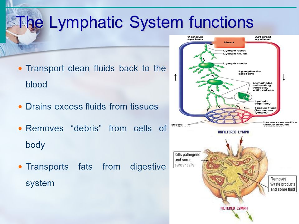 Lymphatic System Functions