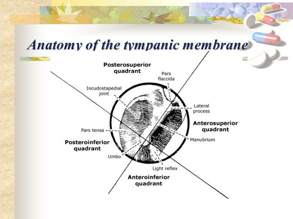 Anatomy tympanic membrane