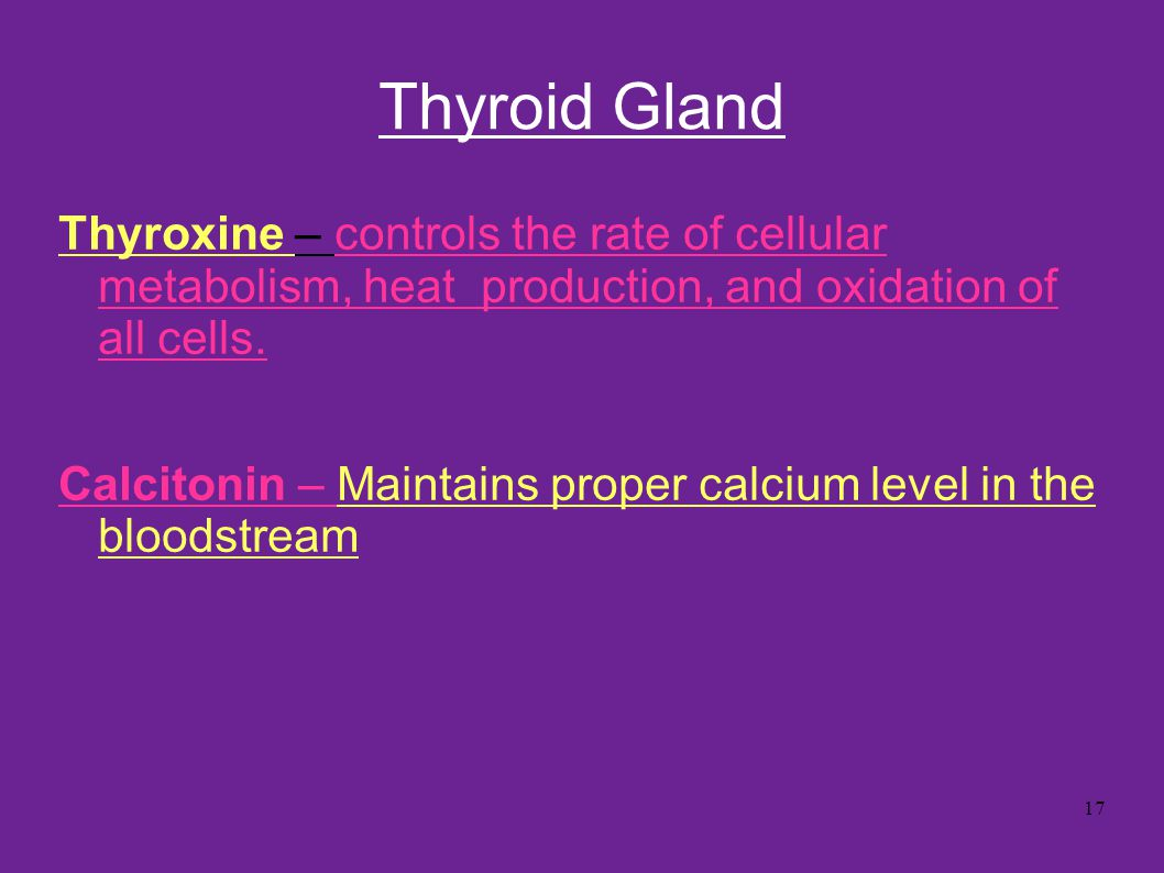 Thyroid Gland Thyroxine – controls the rate of cellular metabolism, heat production, and oxidation of all cells.