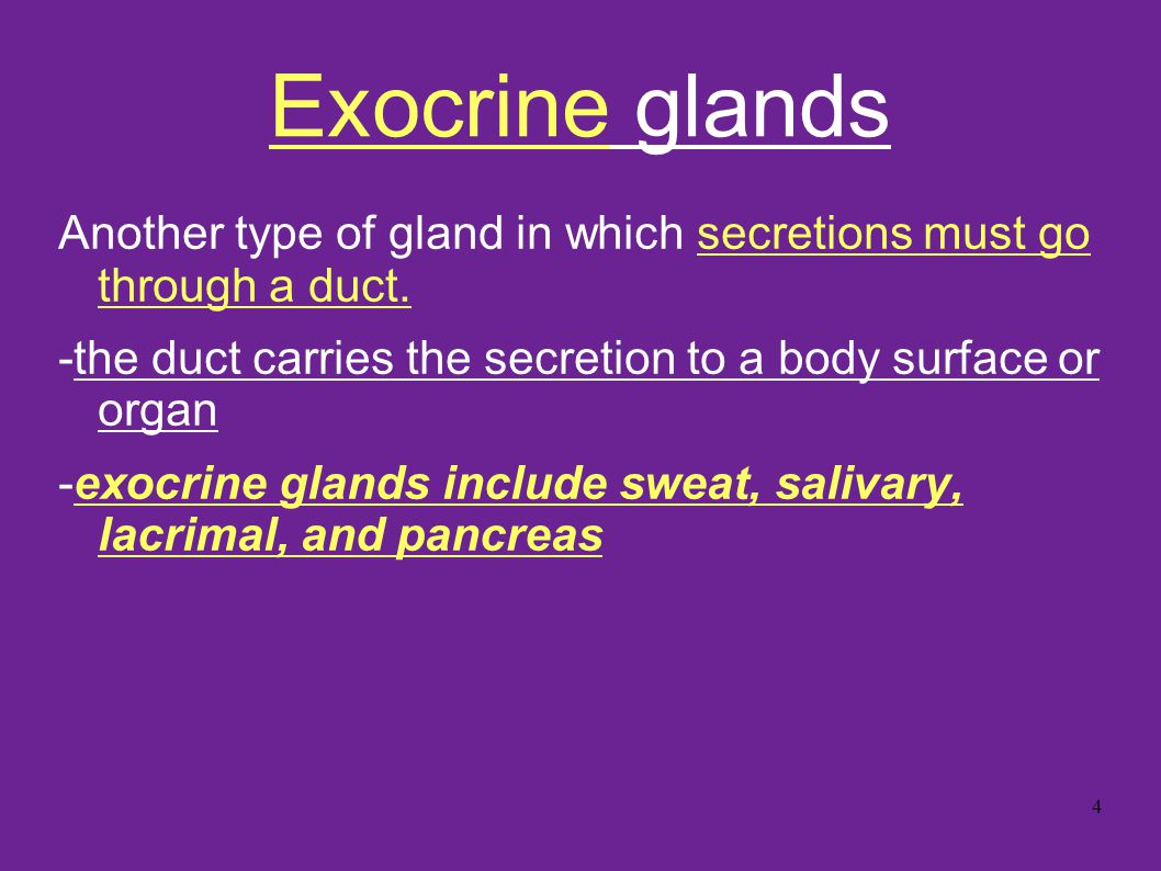 Exocrine glands Another type of gland in which secretions must go through a duct. -the duct carries the secretion to a body surface or organ.