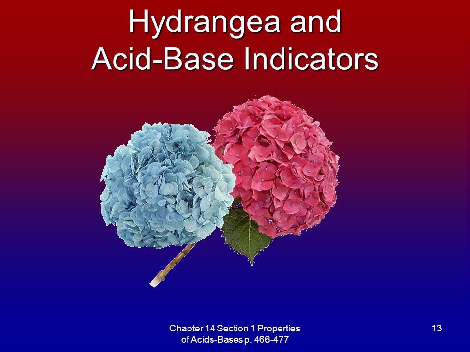 Hydrangea and Acid-Base Indicators
