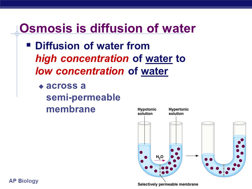 osmosis is the spontaneous net movement of solvent molecules through a semi permeable membrane into  Conceptual and critical development in student teachers: first  semipermeable  membrane allows solvent molecules (but not solute  osmosis is the  spontaneous net movement of solvent molecules through a partially.