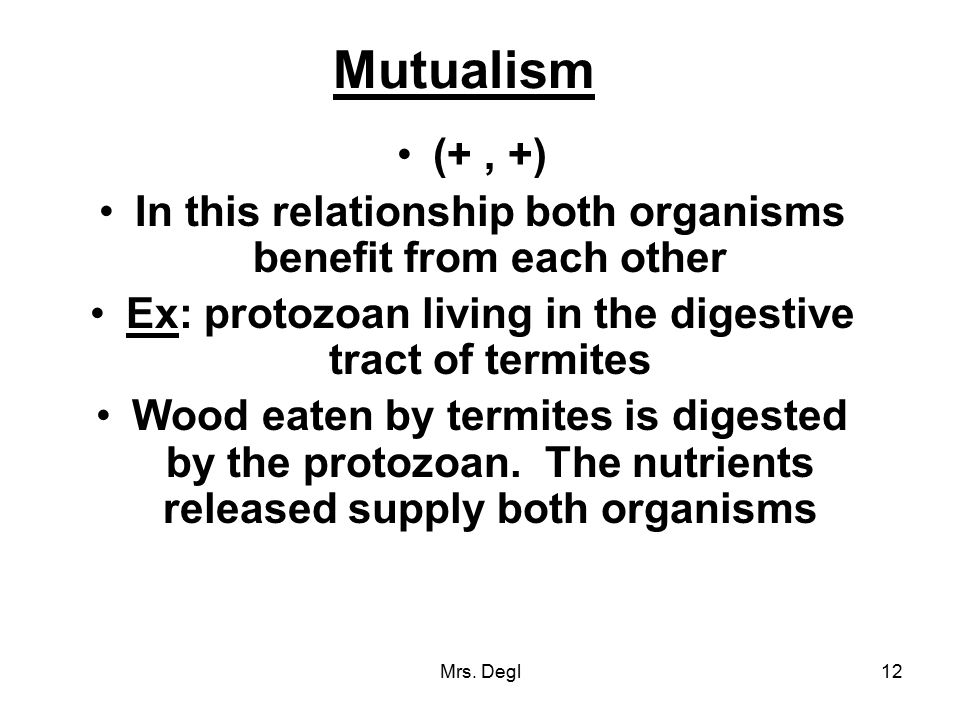 Mutualism (+ , +) In this relationship both organisms benefit from each other. Ex: protozoan living in the digestive tract of termites.