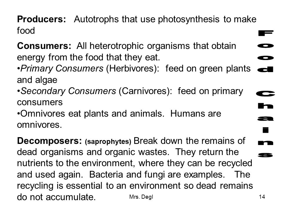 Food Chains Producers: Autotrophs that use photosynthesis to make food
