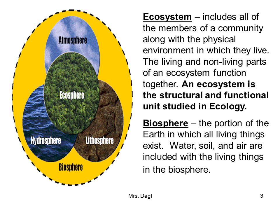 Ecosystem – includes all of the members of a community along with the physical environment in which they live. The living and non-living parts of an ecosystem function together. An ecosystem is the structural and functional unit studied in Ecology.