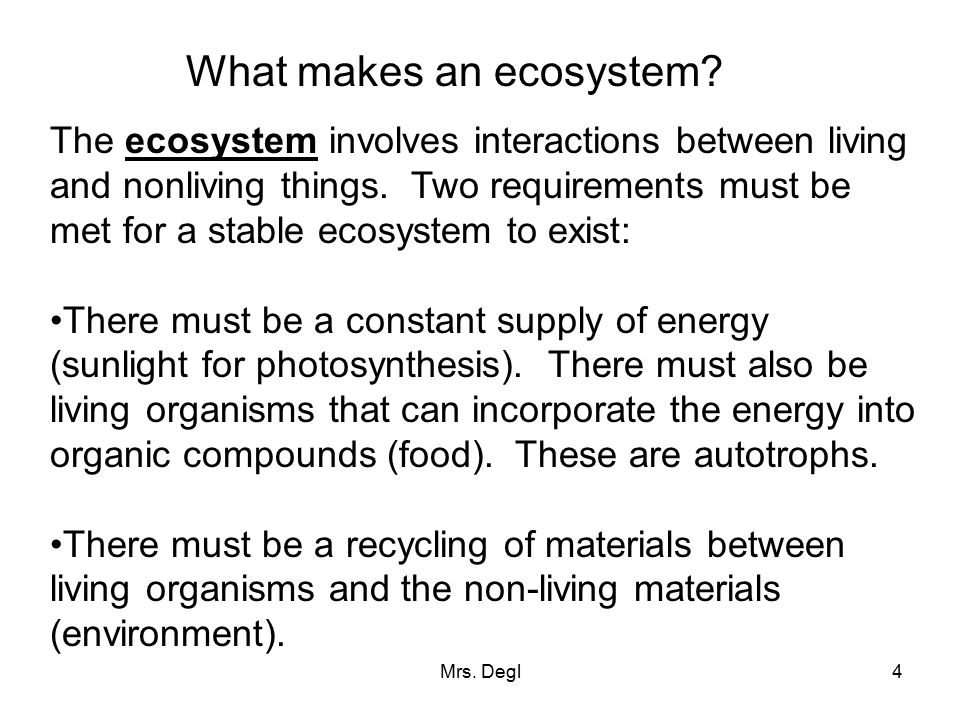 What makes an ecosystem
