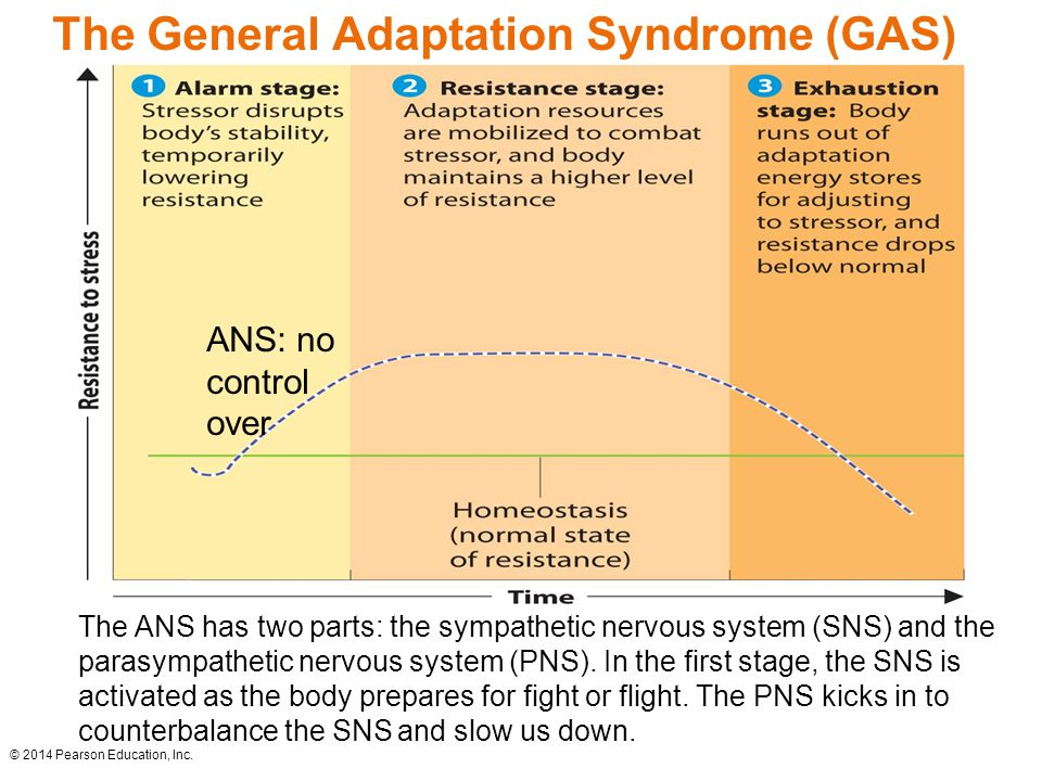 What to know about general adaptation syndrome