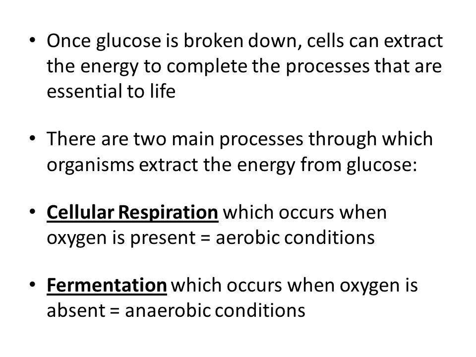 Fermentation which occurs when oxygen is absent = anaerobic conditions