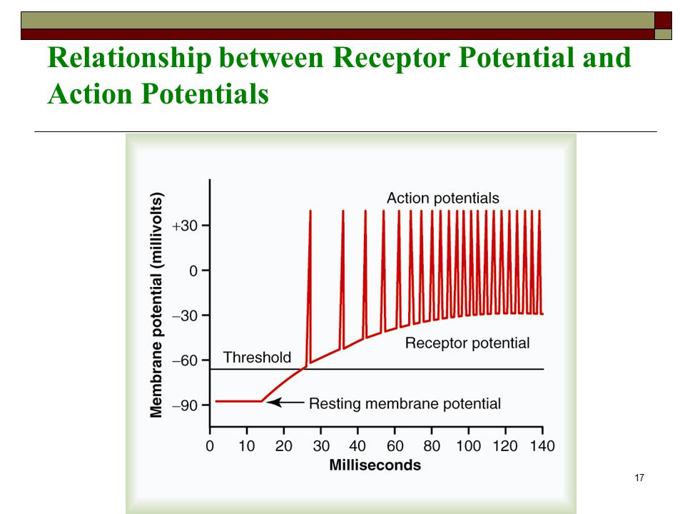 relationship between nerve impulses and action potentials occur