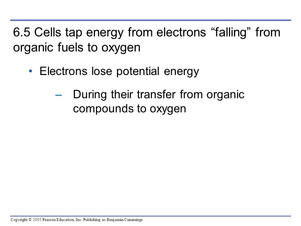 6.5 Cells tap energy from electrons falling from organic fuels to oxygen Electrons lose potential energy.