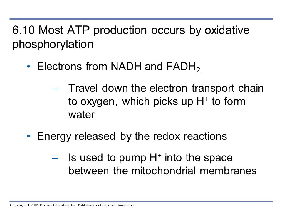 6.10 Most ATP production occurs by oxidative phosphorylation