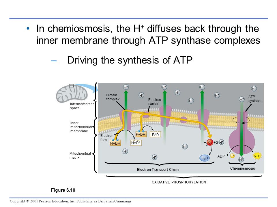 Driving the synthesis of ATP